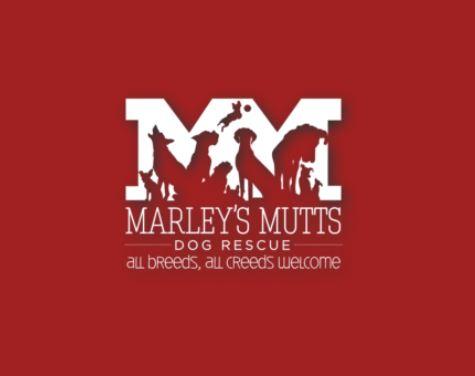 marleys mutts_1523659521392.JPG.jpg