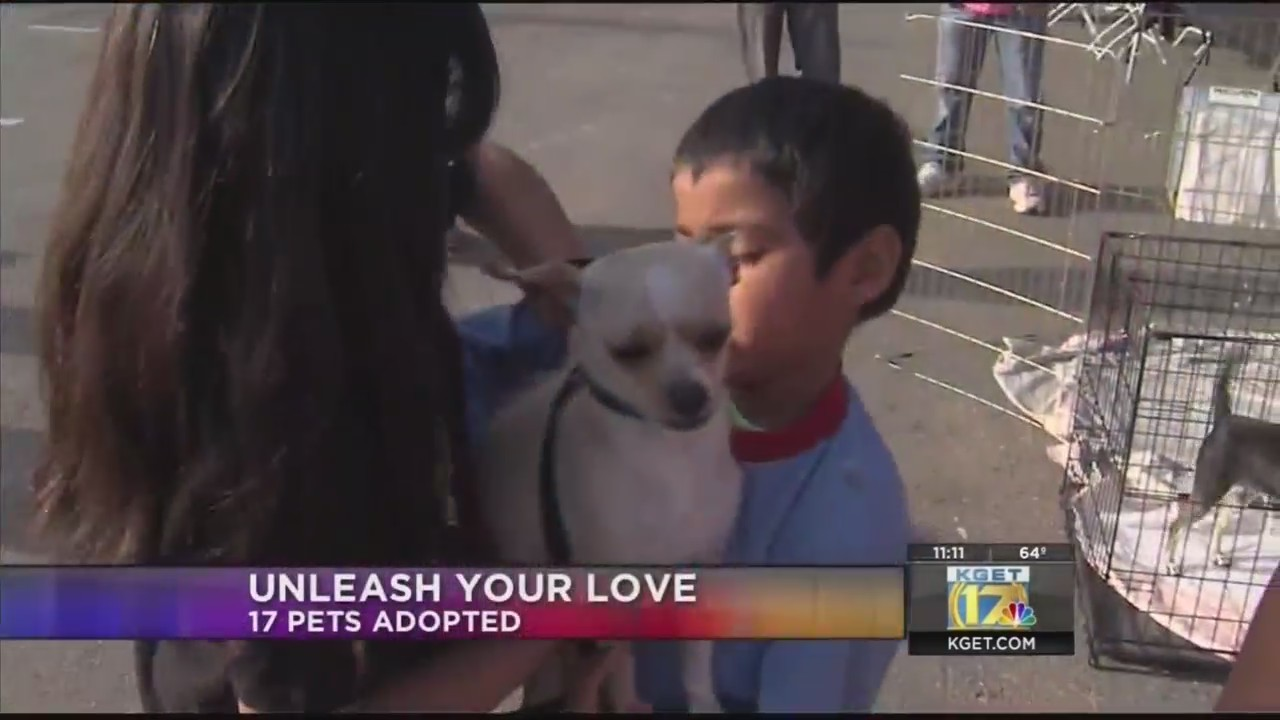 At least $7,000 raised at Unleash Your Love adoption drive and fundraiser for SPCA