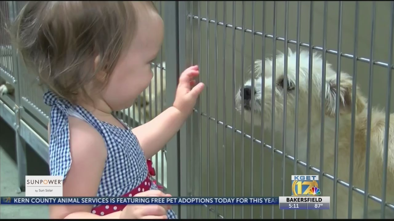 Sponsor pays for free pet adoptions at Kern County Animal Services