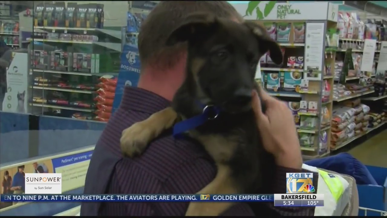 Veterans get acquainted with their new service dogs