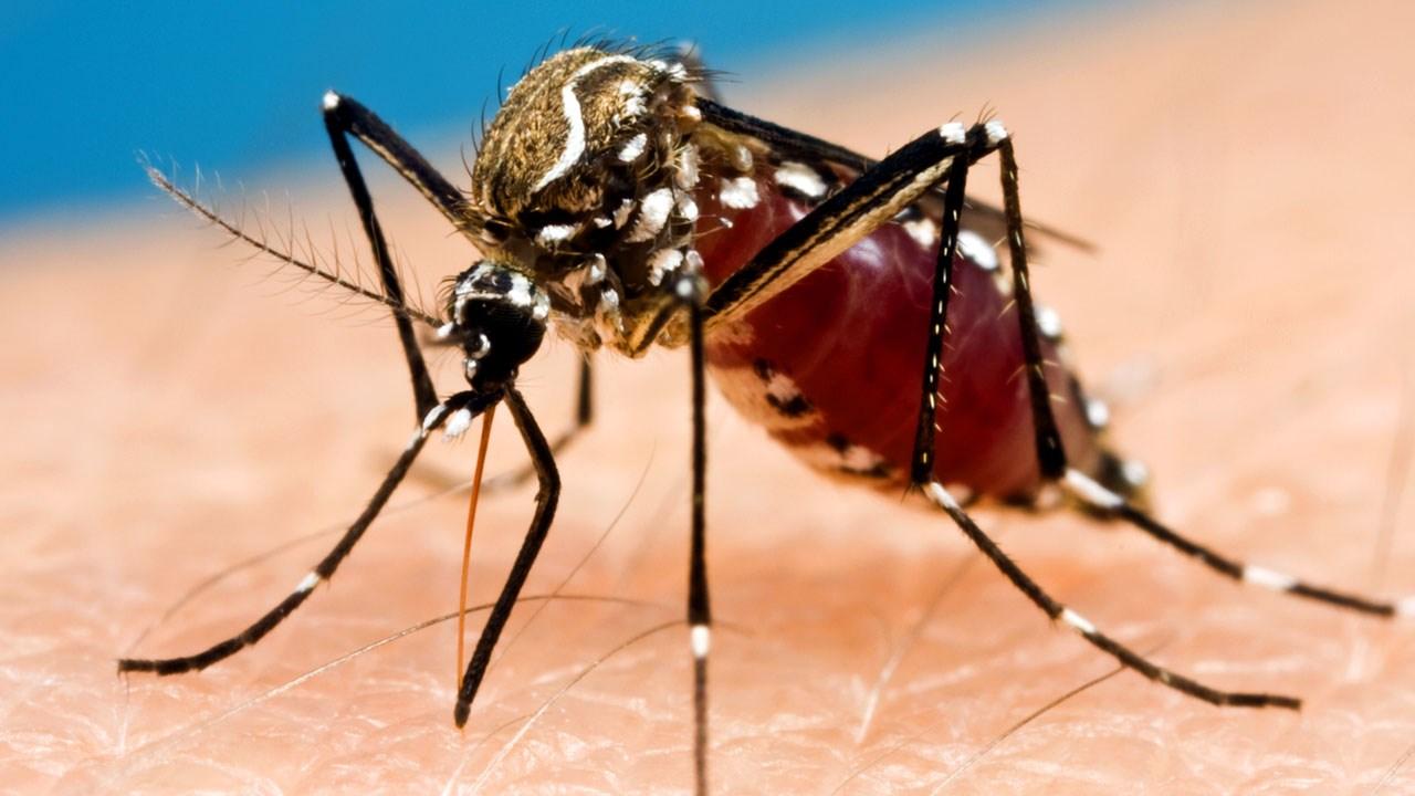 Mosquito_1532129860604.jpg