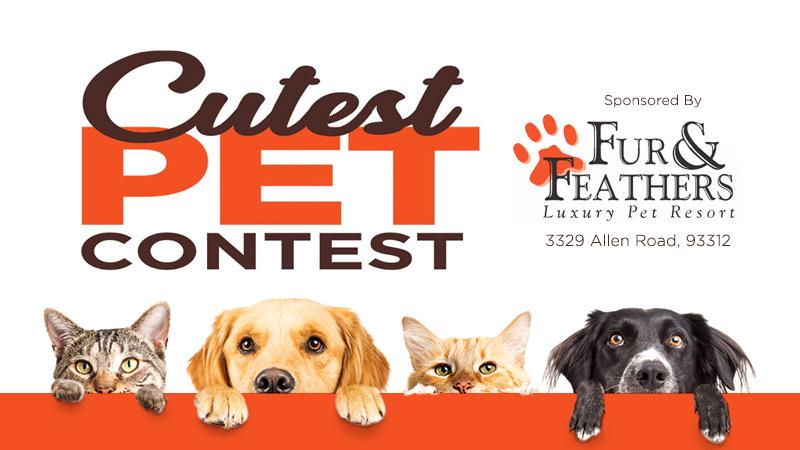 2019 Cutest Pet Contest