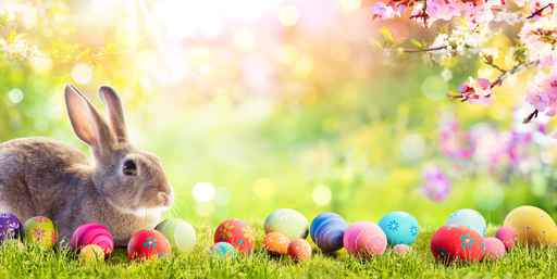 Adorable Bunny With Easter Eggs In Flowery Meadow_1555544783247