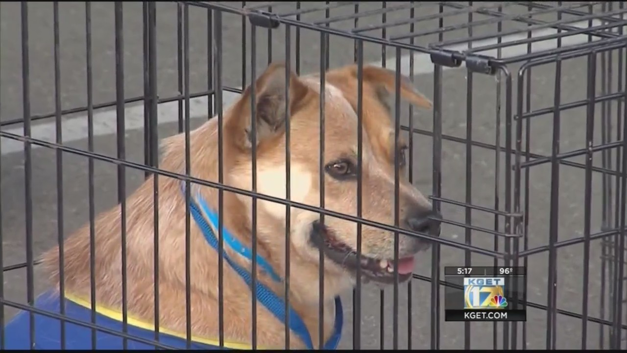 Bakersfield SPCA 'Unleash Your Love' adoption event takes place May 1