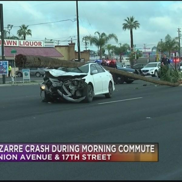 Car crash involving palm tree