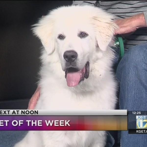 KGET Pet of the Week: Forrest