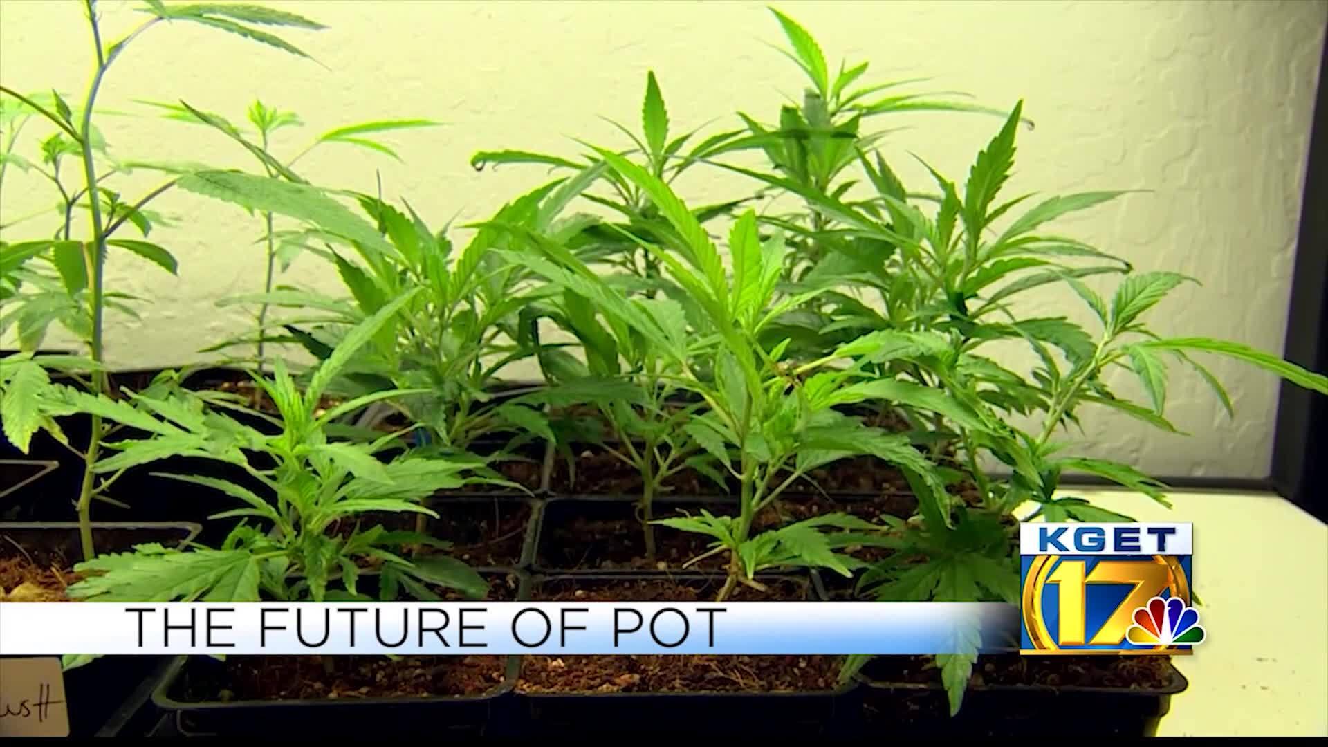 WEED_WARS__Marijuana_advocates_urge_supe_6_20190501014254
